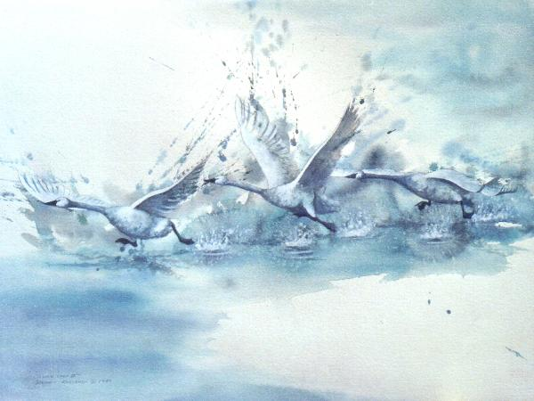 original watercolour on paper by Dennis Kalichuk Tundra Swan